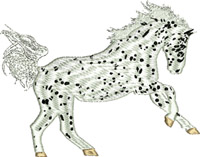 Appaloosa Horse-Appaloosa Horse, Horse embroidery, machine embroidery, embroidery